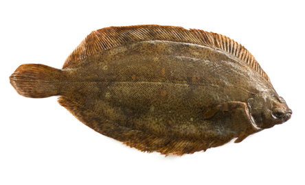 Buy witch from fish co midlands for Dover sole fish