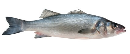 Buy Wild Bass from Fish Co Midlands