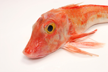 Buy Gurnard from Fish Co Midlands
