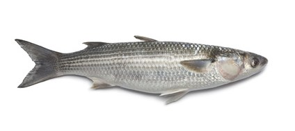 Buy Grey Mullet from Fish Co Midlands