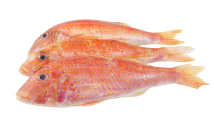 Buy red mullet from fish co midlands for Red mullet fish