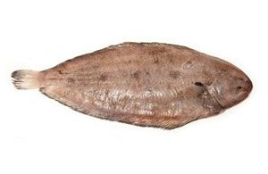 Fish co fine foods ltd flat fish for Dover sole fish